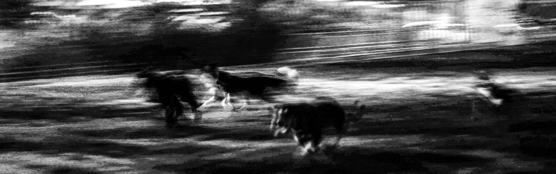 Foto: Josep Sancho Sala