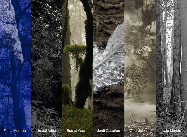 Exposició Dins el bosc