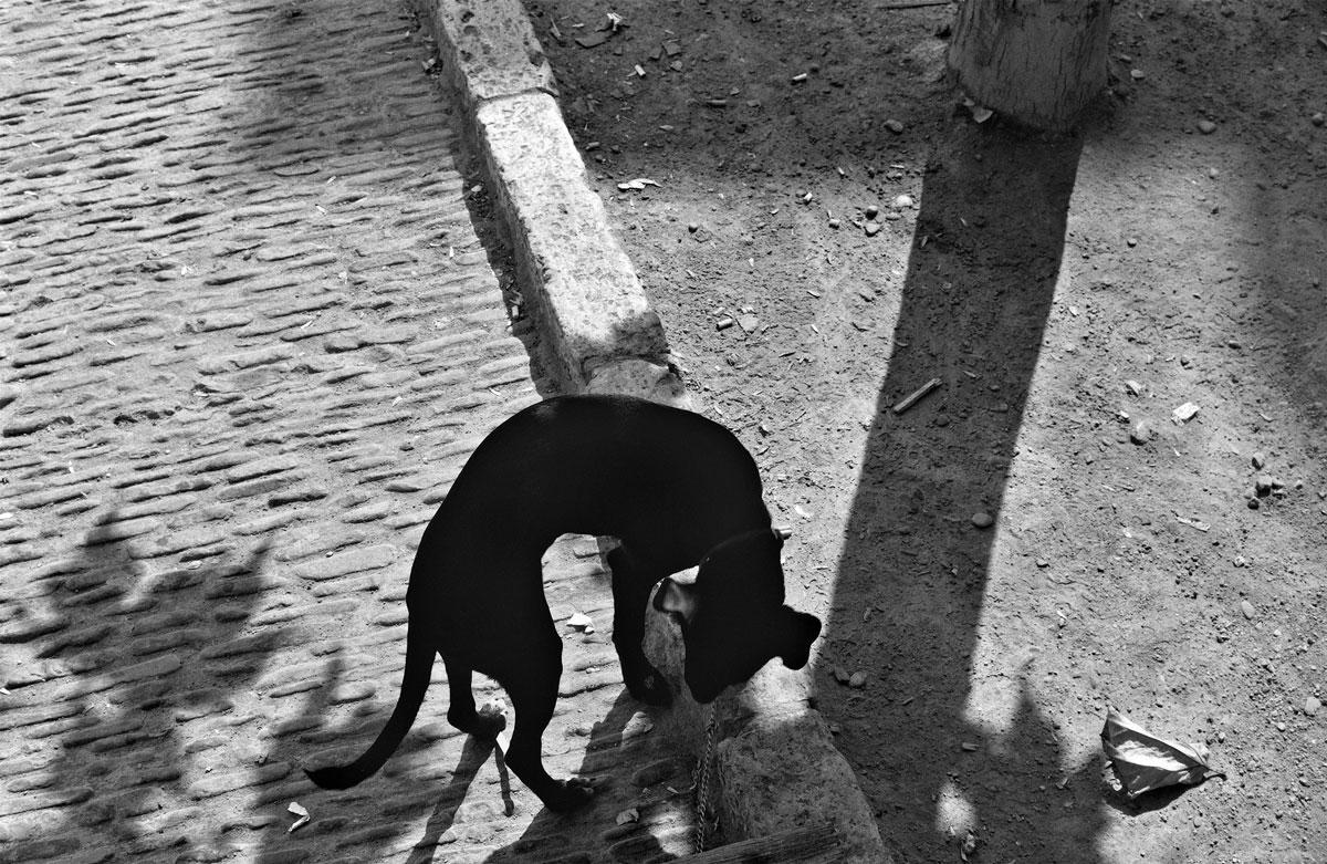 Perro y sombras Tarazona (Zaragoza), 1993. Foto: Mario Gómez Vidal