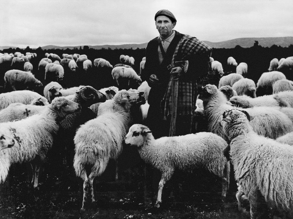 El pastor (1963). Pastor amb ovelles. Foto: Josep Busoms